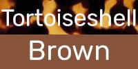 Tortoiseshell/Brown